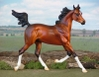 CPS_Its_All_About_Me_-_BK_-_bay_arabian_filly_-_OF_P_Stone_arab_yearling_-_liberty_1.jpg