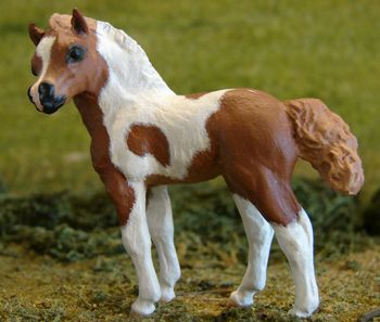 British Shetland Pony Filly