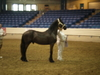Axel_Yearling_pics_008.JPG