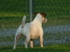 The_Dogs_5-05_005.jpg
