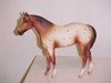 T_QH_yearling_-chestnut_semi_leopard_Robin_LE.JPG