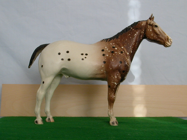 #99 Appaloosa Performance Horse