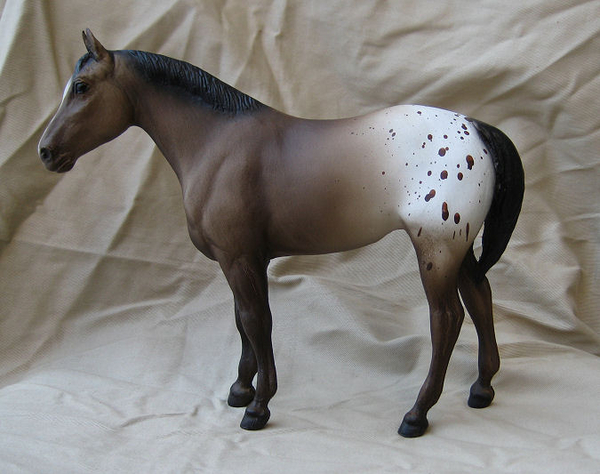 Appaloosa Yearling