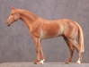 AA_Thoroughbred.jpg