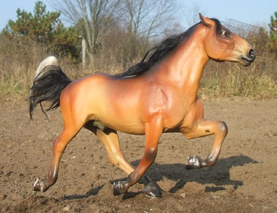 Kentucky Mountain Horse Gelding
