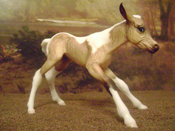 Part Arabian Colt
