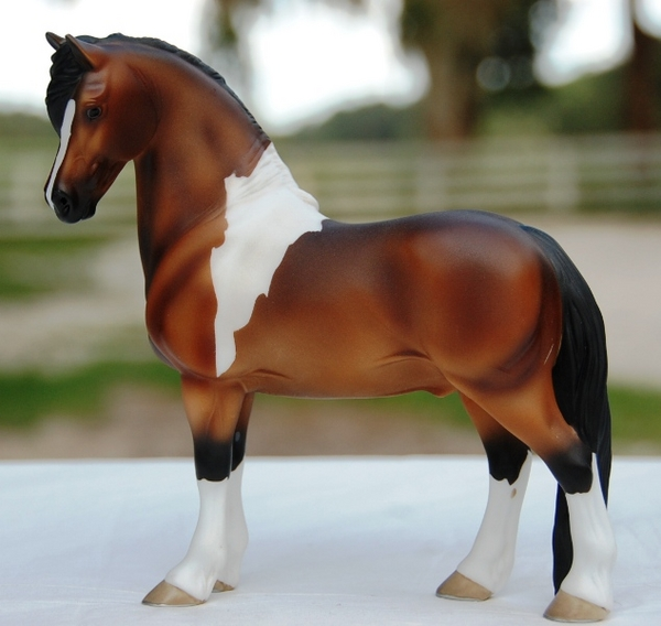 Haflinger cross stallion