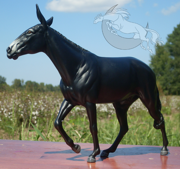 CHAMPION - Gaited Mule (TWH x Donkey) - Stallion