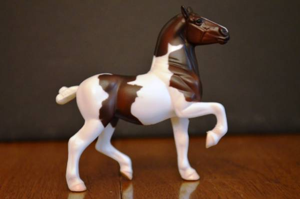 American Spotted Draft Mare