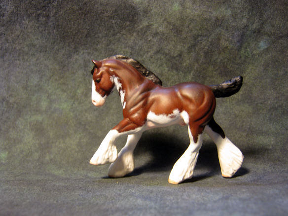 Clydesdale, Colt