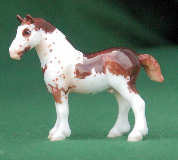 1st Carling -- American Spotted Draft Stallion
