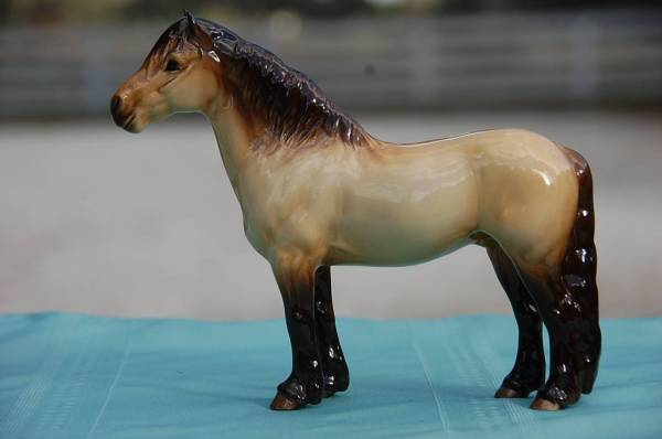 Highland Fling - Highland Pony stallion