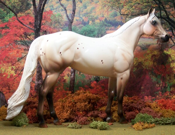 Dusted By Pixies - Chestnut Varnish Roan Few Spot Leopard, Appaloosa, Mare,