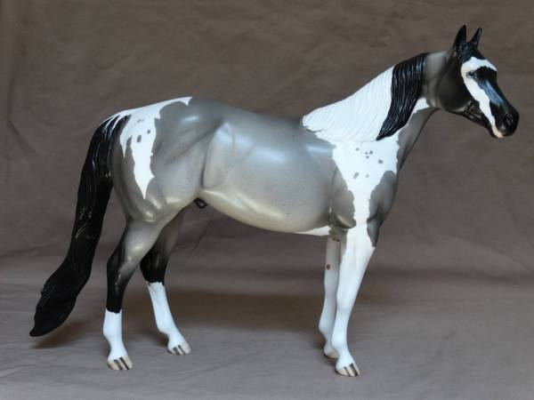 Blue Badger -  Blue Roan Tobiano Stallion