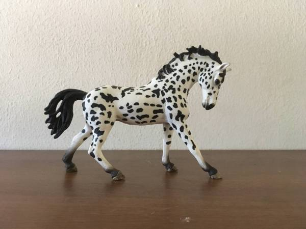 Spotted Cassanova-Knabstrupper Stallion