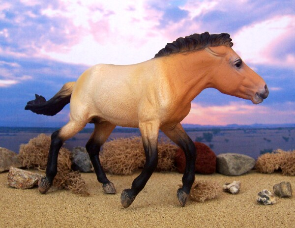 Genghis Kawn - Dun, Przewalski, Stallion, OF CollectA