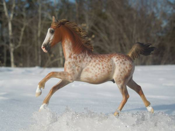 American Saddlebred/Grade cross gelding