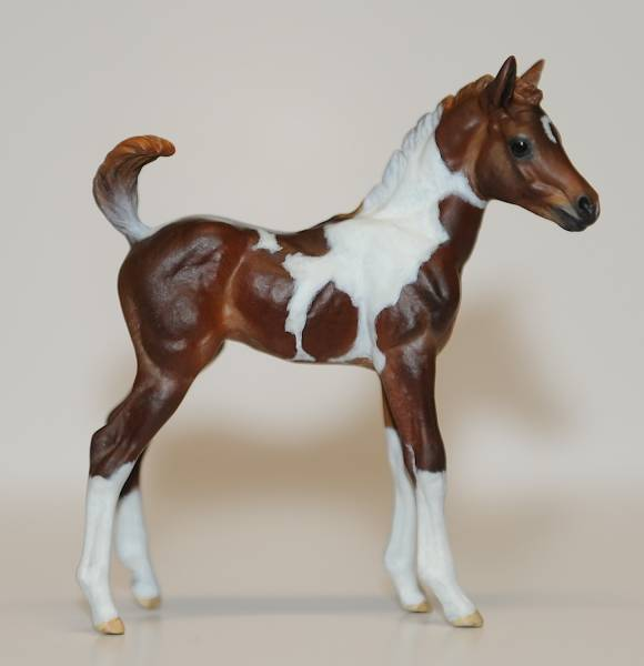 Chincoteague Pony Filly - FT Stormy Sensation