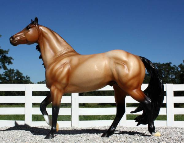 AQHA Stallion - VF Dillon