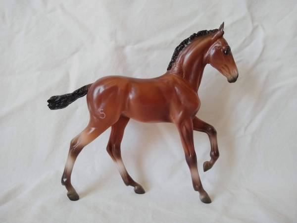 Andalusian Colt