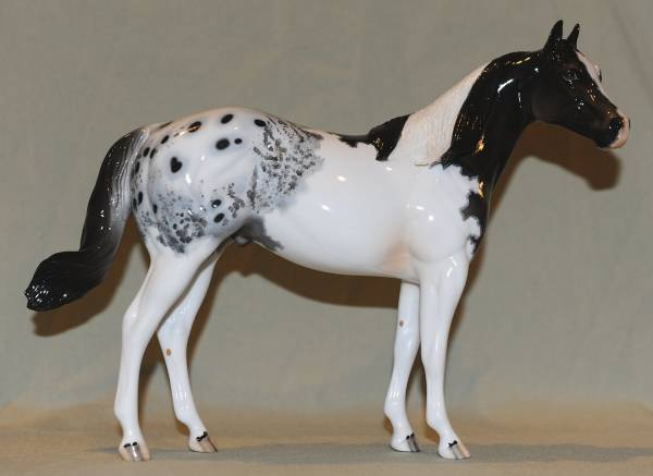 International Spotted Horse Stallion - FT Jackpot